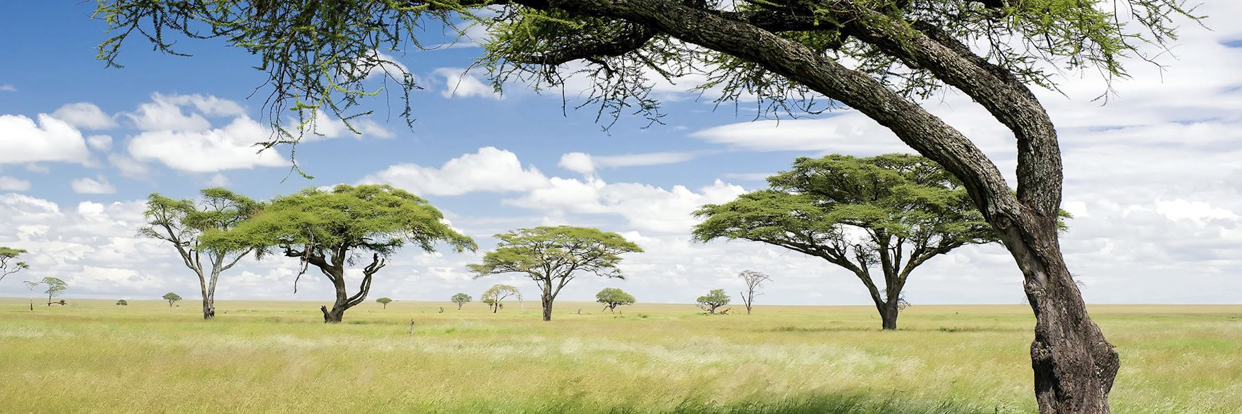 Zimbabwe safaris and holidays