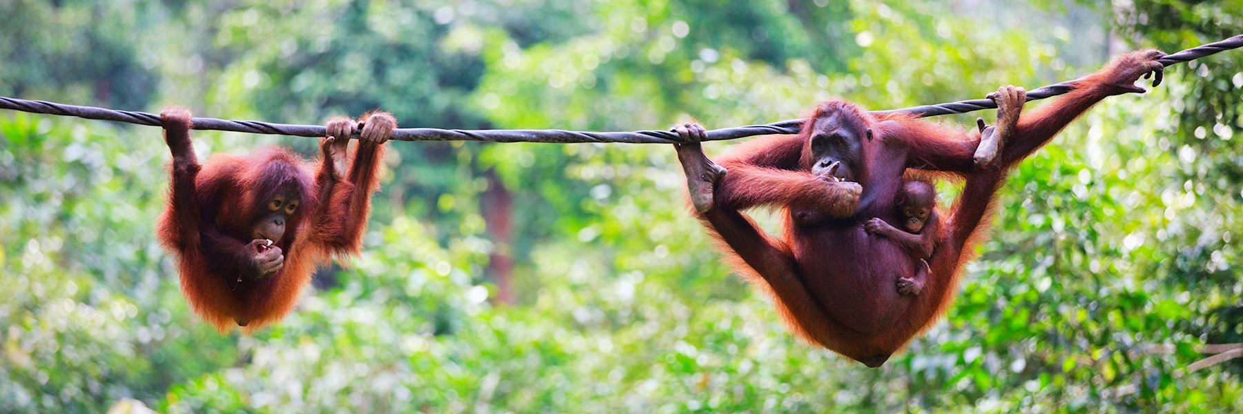 Borneo trip ideas